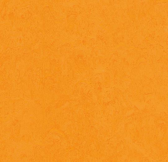 Linoleum Forbo Marmoleum Fresco 2.5mm - 3262 marigold auf DeinBoden24.de